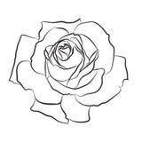 Piękna ręka rysujący nakreślenie wzrastał, odizolowywał, czarnego contur na białym tle Botaniczna sylwetka kwiat Zdjęcia Stock