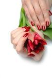 Piękna ręka z czerwonym manicure'em i kwiatami Zdjęcia Stock