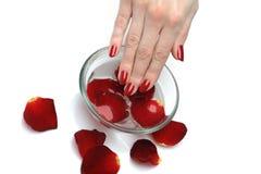 Piękna ręka z gwoździa czerwonym manicure'em i płatkami Obrazy Stock