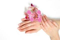 Piękna ręka z pięknego gwoździa francuskim manicure'em Obraz Royalty Free