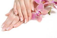Piękna ręka z pięknego gwoździa francuskim manicure'em Obrazy Stock