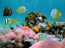 piękna rafa koralowa zdjęcie royalty free