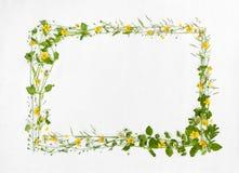 Piękna rama łąkowy kwiat Fotografia Royalty Free