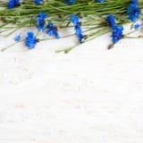 Piękna rama Błękitny knapweed kwitnie na białym tle Obrazy Royalty Free