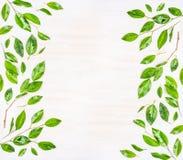 Piękna rama lub wzór zieleń opuszczamy z wodnymi kroplami na białym drewnianym tle, odgórny widok Zdjęcia Stock