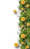Piękna rama róże, liście, faborki i perły, Obrazy Royalty Free