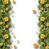 Piękna rama róże, liście, faborki i perły, Zdjęcia Royalty Free