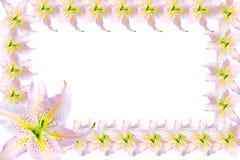 Piękna rama różowe leluje odizolowywać na białym tle Obraz Royalty Free