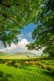 Piękna rama robić łąkowymi i dużymi drzewami w Gromadzkim jeziorze, UK Zdjęcie Royalty Free