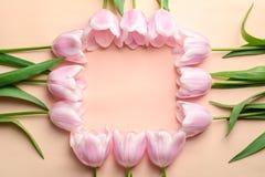 Piękna rama robić tulipany dla Macierzystego ` s dnia Fotografia Royalty Free