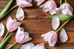 Piękna rama robić tulipany dla Macierzystego ` s dnia Zdjęcie Stock