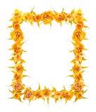 Piękna rama wysuszeni kolor żółty róży kwiaty odizolowywa na whit Obrazy Royalty Free