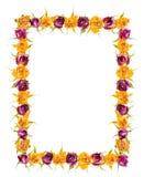 Piękna rama wysuszeni koloru żółtego i menchii róży kwiaty jest odizolowywa Zdjęcia Royalty Free