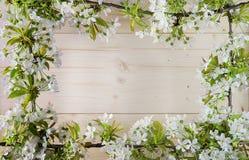 Piękna rama z kwiatami wiśnia wiosny lato Obrazy Stock