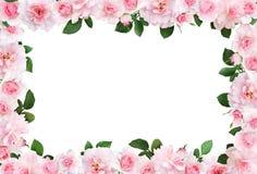 Piękna rama z menchii różą kwitnie i liście Obraz Royalty Free
