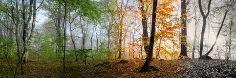 Piękna ranek scena w lesie, zmiana cztery sezonu Zdjęcia Stock