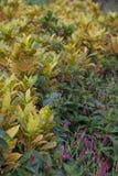 Piękna roślina Obraz Royalty Free