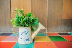 Piękna roślina w podlewanie garnka wazie Obrazy Stock
