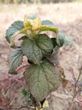 piękna roślinnych Fotografia Stock