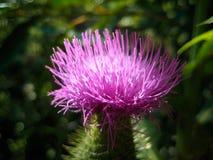 piękna roślinnych zdjęcia stock