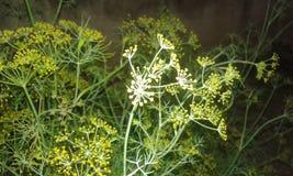 piękna roślinnych Zdjęcia Royalty Free