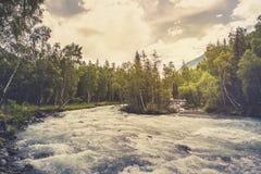 Piękna rzeka w lasowej naturze Pokojowy stonowany natury tło fotografia stock