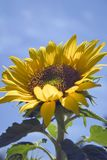 piękna słońce zdjęcie stock
