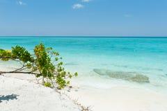 Piękna scena w oceanie indyjskim, Maldives wyspy Fotografia Stock