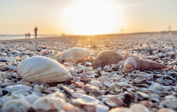 Piękna scena z skorupami przy plażą Obraz Stock