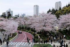 Piękna sceneria Sakura Matsuri festiwal w Roppongi zdjęcia royalty free