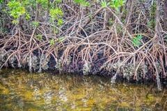 Piękna sceniczna ucieczka natura wraz z widokiem mangrowe w Orlando, Floryda fotografia stock