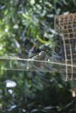 Piękna sieć z czarnym pająkiem obrazy stock