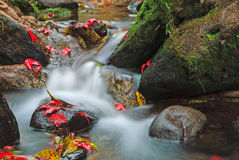 Piękna siklawa i czerwoni liście klonowi Fotografia Stock