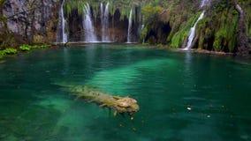 Piękna siklawa, jeziora i jesień las w Plitvice parku narodowym, Chorwacja zbiory