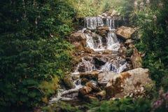 Piękna siklawa na rzece w lesie w górach spada kaskadą ri Fotografia Stock