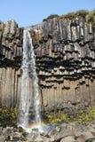 Piękna siklawa Svartifoss w Skaftafell parku narodowym, Iceland Obraz Stock