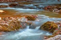 Piękna siklawa w lesie przy zmierzchem Jesień krajobraz, spadać liście Fotografia Royalty Free