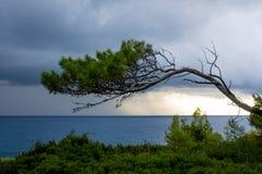 Piękna skalista linia brzegowa z morzy drzewami i falami obraz stock