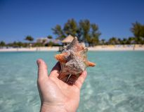 Piękna skorupa na tropikalnej piaskowatej plaży trzyma mężczyzną zdjęcie stock