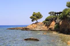 Piękna sosna na kamiennym wypuscie Zdjęcie Royalty Free