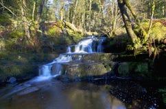 Piękna spada kaskadą siklawa, Nant Bwrefwy, Blaen-y-Glyn las fotografia stock