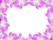 Piękna storczykowa kwiat rama odizolowywająca na białym tle dla kartka z pozdrowieniami lub twój projekta Zdjęcia Stock
