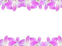 Piękna storczykowa kwiat rama odizolowywająca na białym tle dla kartka z pozdrowieniami lub twój projekta Fotografia Stock