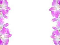 Piękna storczykowa kwiat rama odizolowywająca na białym tle dla kartka z pozdrowieniami lub twój projekta Obraz Stock