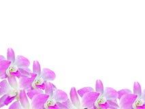 Piękna storczykowa kwiat rama odizolowywająca na białym tle dla twój projekta Zdjęcia Stock