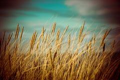 Piękna sucha trawa i przegięty tło - 80's retro rocznik obraz royalty free
