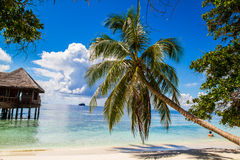 Piękna tropikalna plaża w Maldives Obraz Royalty Free
