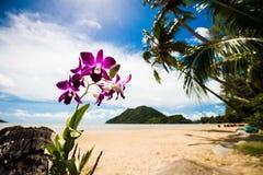 Piękna tropikalna plaża w Tajlandia Zdjęcia Royalty Free