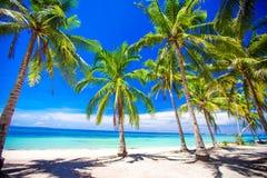 Piękna tropikalna plaża z drzewkami palmowymi, białym piaskiem, turkusową ocean wodą i niebieskim niebem, Fotografia Royalty Free