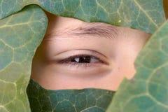 Piękna twarz zakrywająca zielonymi liśćmi fotografia stock